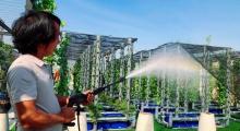 Độc đáo với khu vườn thẳng đứng tại sân thượng Saigon Homes
